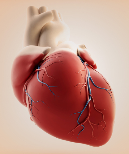 THI Researcher Working With Harvard Apparatus Regenerative Technology On Growing New Heart Cells