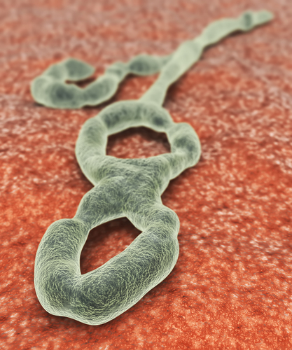 NIH Grants $2.36M for Texas Biomed Research on Ebola Diagnosis