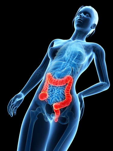 Crohn's disease and ulcerative colitis research teams to receive major support from CCFA