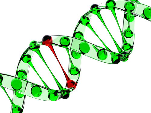 Peek into AHDC1 Mutation Leads to Discovery of New Syndrome by BCM Researchers