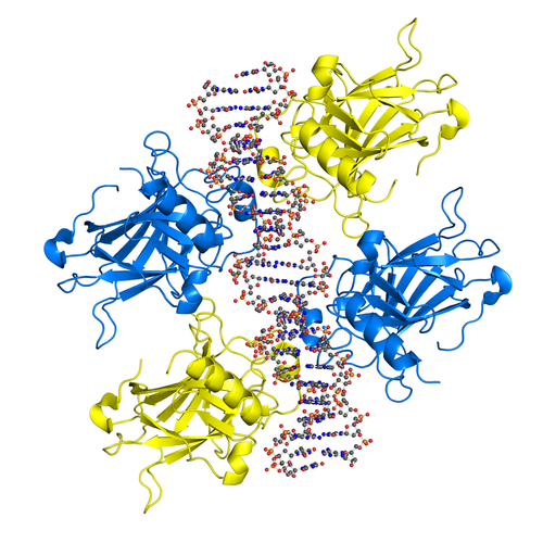 Irreversible Inhibitor for KRAS Gene Mutation Associated With Lung, Colon, and Pancreatic Cancers Identified By UT Southwestern Cancer Researchers