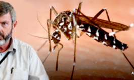 Texas Chikungunya Virus Expert Publishes Important Overview of this Emerging Disease