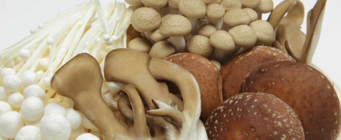 UTHealth Research Shows Mushroom Extract AHCC Can Be Beneficial For Treating HPV